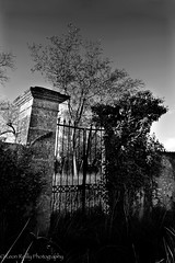 Overgrown Chateau gates, Bordeaux (broadswordcallingdannyboy) Tags: blackandwhite copyright france tree landscape gates bordeaux naturallight leon stonewall reilly canoneos ruraldecay lonetree naturalframe fours wrappingpaper sudouest gironde pieshop bwarchitecture eos5d blaye bwlandscape leonreilly leonreillyphotography copyrightleonreilly
