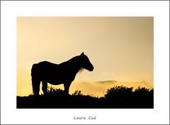 Niebla (Laura Cu) Tags: caballo niebla cantabria ason lauracue contraluznieblacaballolauracueasoncantabria