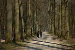 main avenue (malinowy) Tags: belgium belgique belgie arboretum tervuren botanicgarden belgica flanders belgien belgio flandria vlaanderen belgia plantentuin vlaamsbrabant ogrdbotaniczny brabancjaflamandzka kruidtiun