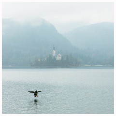 Landing Duck (It's Stefan) Tags: 6x6 church fog square foggy slovenia bled lakebled blejskojezero landingduck