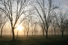 early morning pecan orchard (xthylacine) Tags: morning trees usa sun tree rural sunrise canon georgia early us farm south country orchard callaway pecan 30d tattnall hcallaway xthylacine