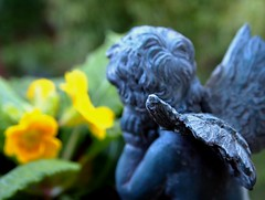 Waiting for Spring (Darwin Bell) Tags: flower nature statue angel wing plan cherub sfist
