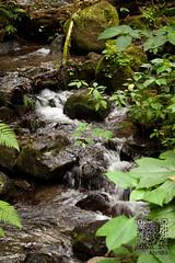 DSC08437 (AzurdiaFoto) Tags: puente guatemala catarata quetzal reserva bosques ri