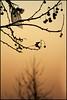 (Giorgia's Psychedelic Breakfast) Tags: alberi flora rosa autunno fazzoletto