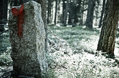 Horror movie (Riccardo Brig Casarico) Tags: mountains tree verde green art colors alberi wow photography photo nikon colours foto bokeh details horror dettagli fotografia nikkor sentiero alto colori montagna atmosfera brig altoadige 18105 adige riki camminare boschi atmosphre d5100 brigrc