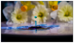 IMG_0351.jpg (Michael Greenley) Tags: macro reflection water canon waterdrop drop waterdropmacro watermacro waterdropreflection canon5dmkii 5dmkii
