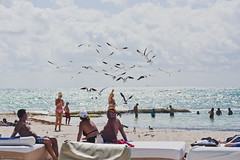 seagulls (ins k.) Tags: travel viaje blue light sunset sea vacation portrait sun sunlight seagulls art luz sol beach sunshine azul mxico landscape mexico atardecer photography mar sand artist day waves photographer arte playadelcarmen playa arena cancun fotografia da olas gaviotas vacaciones cancn artista fotografa    soleado viajefamiliar      inskyung ineskyung