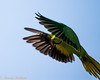IMG_7026L4 (Sharad Medhavi) Tags: bird canoneod50d birdsandbeesoflakeshorehomes