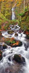 Oirase003 (vincemarion) Tags: red lake fall nature japan forest automne river landscape rouge waterfall maple stream autumnleaves momiji aomori paysage tohoku japon feuille koyo oirase erable couleurautomnale