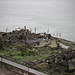 Alcatraz Island_2