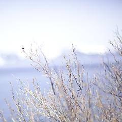 040612 (Corey Holms) Tags: park blue plants bay flora nevada tahoe nv caverock cockeyedhorizon