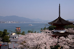 Miyajima Cherry Blossoms[Worldheritage] (h orihashi) Tags: holland japan gate shrine pentax egypt hiroshima miyajima 日本 torii k5 worldheritage itsukushima 広島 世界遺産 awardwinner coth 日本三景 supershot abigfave anawesomeshot flickrhearts flickraward crystalaward diamondclassphotographer flickrdiamond citrit heartawards yourbestphotography hatsukaichishi thebeautyoftrees therubyawards damniwishidtakenthat justonerule arethesebuildings pentaxk5 friendsteam mem0riesfr0mtheheart thesunshinegroup hulyaprettygallerie buildingsall0verthew0rld vacati0ns
