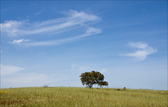 Lonely Tree (Bert Kaufmann) Tags: cloud portugal clouds faro spring loneliness wolken lonely algarve pt lente lonelytree alleen eenzaamheid eenzaam openfield santajusta windveren eenzameboom wolkenpartij inhetopenveld