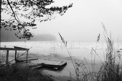 9811 (Zoya Sergeeva) Tags: lake snow ice nature finland landscape dock firtree berth flickraward nikond700 nikon2470
