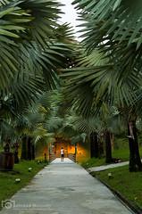 Latest light (mtux) Tags: road park trees light si greenery smcpentaxda35mmf24al
