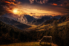 mountains and valleys (Chrisnaton) Tags: trees sunset mountains alps nature landscape switzerland cow sundown surreal hills eveningsky eveningmood amdenerhhenweg