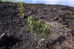 20160517_volcano_piton_fournaise_77t378 (isogood) Tags: reunion volcano lava desert indianocean caldera furnace pitondelafournaise pasdebellecombe reunionisland fournaise peakofthefurnace