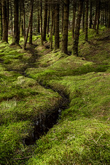 _0JJ1740 (Forrest W) Tags: woodland scotland moss ayrshire