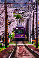 (DSC_3519) (nans0410(busy)) Tags: japan cherry outdoors spring scenery kyoto blossom railway   sakura  kansai     kinkiarea