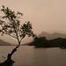 Tree at padarn lake.