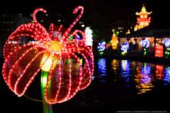 Philadelphia Chinese Lantern Festival (mhoffman1) Tags: flower philadelphia water night reflections lights evening us unitedstates pennsylvania illuminated lanterns philly ripples pedal franklinsquarepark sonyalpha a7r