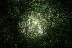 Transition (sdrusna79) Tags: alberi hole ring erba transition matteo buco piante tress cerchio lotti passaggio anello cespuglio roghi piantagione nikond7100