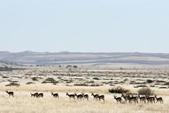 Etosha - Namibia (wietsej) Tags: wild landscape sony namibia etosha a700 sal70200g