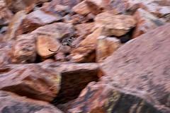 Australia 010 (bushouhige_murph) Tags: australia simpsonsgap rockwallaby westmacdonnellnationalpark