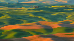 Loess is More (Kevin Benedict Photography) Tags: light shadow abstract green texture beautiful sunrise landscape washington spring nikon spokane patterns wheat curves hills textures fields farms crops verdant rolling colfax palouse loess steptoebutte photobenedict