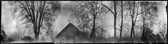Reminiscence (batuda) Tags: pinhole obscura stenope analogue paper 6x24 kodak polymax d76 coffeecan can cylindrical nescafe wide wideangle 360 360degreeatmospheric atmosphere landscape nature building architecture old trees tree branches countryside inknai tauragnai utena lithuania sky bw blackandwhite anamorph anamorphic film papernegative nostalgic inexplore