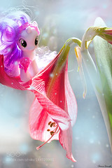 My Little Pony... Magic (SeattleHVAC172) Tags: life flowers light red game flower macro home colors children toy happy miniature child little magic sigma games pony be 105 magical reflaction my marillas
