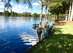 We stand with/support Orlando ~ (Shein Die) Tags: tree nature water outdoors orlando florida parks pride lgbt fowl lakeeola pulse oneorlando orlandolove orlandounited orlandostrong orlandofloridatragedy