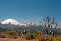 Mt. Burney (figllano) Tags: elements mountain snow flowers wildflowers tress