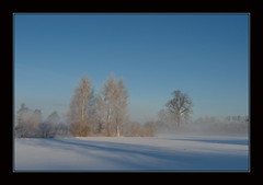 22.02.2012 (inga_art) Tags: wood morning blue trees winter light sky white mist snow cold tree misty fog forest season landscape lights countryside day colours freezing olympus latvia latvija e510 ingaart