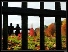 Les grilles du parc (chando*) Tags: trees people fall automne fence bench autum belgium belgique arbres tervuren grille banc gens tervueren vlaamsbrabant vossem