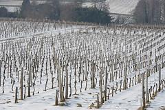 Vignes à Saint-Georges Saint-Emilion en Hiver