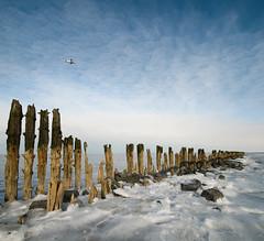Chill (Dani℮l) Tags: winter holland ice netherlands waddenzee landscape frozen nikon daniel tide flight salt nederland chilly groningen icy wad friesland schiermonnikoog landschap ijs koud paaltjes d300 zout bosma moddergat paesens vertorama