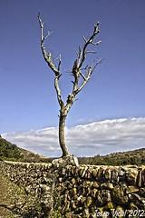 Un arbol muerto (50josep) Tags: canon nubes invierno hdr menorca canon40d 50josep geomenorca geomenorcaonlythebest