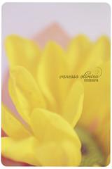 366 project | 69/366 (@agirafinha) Tags: flower macro project flor zee avi monte 366