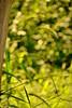 Novum (JavierAndrés) Tags: summer naturaleza plant blur verde green planta nature grass yard garden nikon soft bokeh patio pasto desenfoque verano spike suave jardín espiga yuyo bokehdots mygardenschool d3100