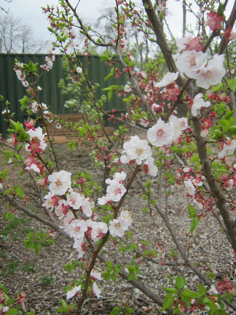 Spring at Nine Palms Ranch