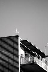 a plane and a building (grwsh.marcel) Tags: white black building plane canon licht 7d zwart wit 100400mm blackdiamond gebouw vliegtuig surrealistisch canon7d unreallijn
