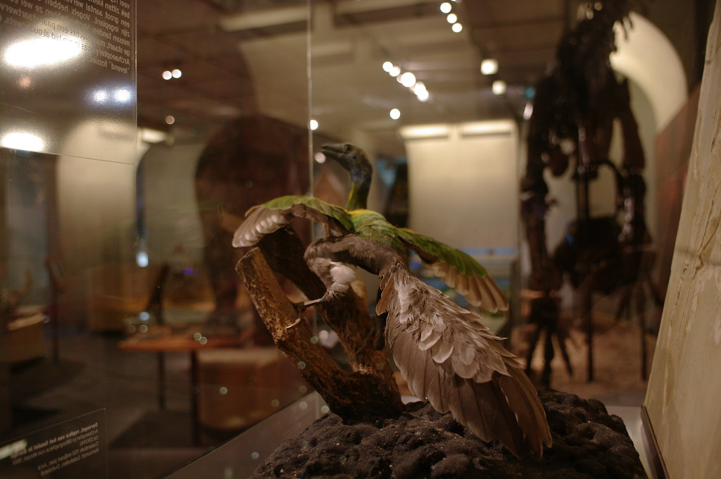 Museon Archaeopteryx