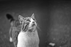(. scorp) Tags: portrait bw cat pentax 85mm swirly cyclop f15 helios40