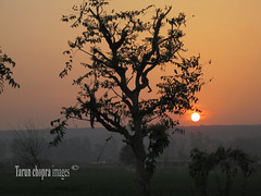 IMG_s0277 (Tarun Chopra) Tags: sunset landmark gurgaon s100 powershots100 canonpowershots100