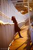 But I have... (Ilko Allexandroff / イルコ・光の魔術師) Tags: life sunset portrait selfportrait self japanese hope golden drink bokeh kobe elegant 135mm ilko portraitphotography photographytypes allexandroff