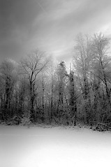 impressionist snow (loco's photos) Tags: trees winter blackandwhite bw white snow storm cold forest season landscape woods pentax kr da15limited