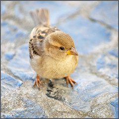 sparrow (Jose Antonio Pascoalinho) Tags: portrait urban cute bird colors animal nikon snapshot nikkor capture afs 70200mm 128 zedith