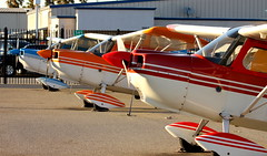 """Citabria Row"" (Garrett Grant) Tags: california school wheel train training san aviation tail jose flight champion american valley reid transition silicon aerobatics hillview bellanca citabria taildragger aerodynamic 7eca tailwheel dragger 7kcab n53893 n88353 n5032g"