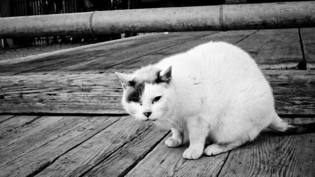 Today's Cat@2012-03-05